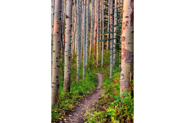 Aspen Glade Trail Beaver Creek Colorado Fine Prints Wall Art