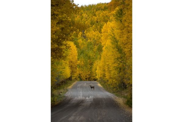 Cimarron Road Colorado Fine Prints Wall Art