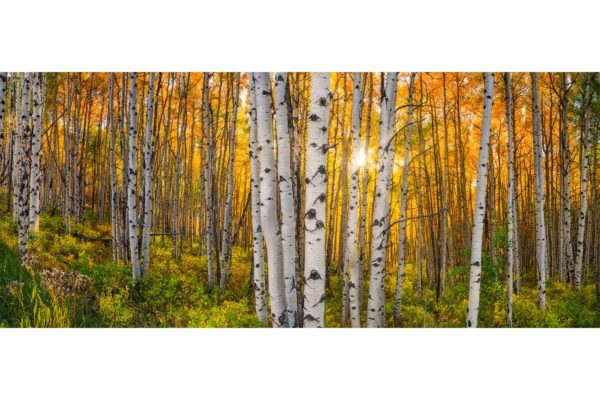 Beaver Creek Colorado Aspens Panorama Shop Fine Prints Wall Art