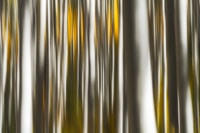 Shop Fine Prints Wall Art - Abstracts